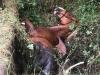 Tierrettung (12)